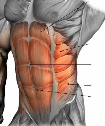 Los abdominales, un arma de doble filo – Velascotraining